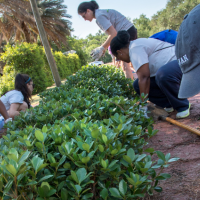 Disaster Resilience Leadership Students volunteer in a community garden.